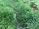 Vereador cobra por limpeza dos córregos na Taboa e Taquaruçu