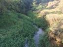 Vereador pede por limpeza de córregos e Rio dos Bagres